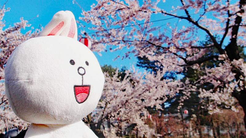 Cony enjoys sakura hanami.