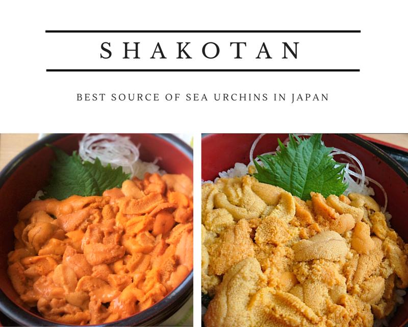 Shakotan Sea Urchin