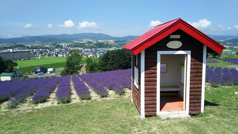 Little house in front of the lavender field at Hinode Park.