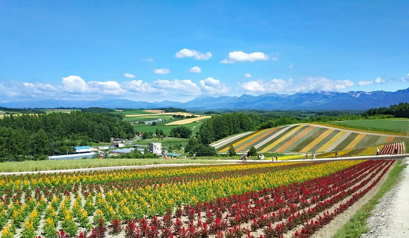 Shikisainooka has many fields filled with different colorful flowers.