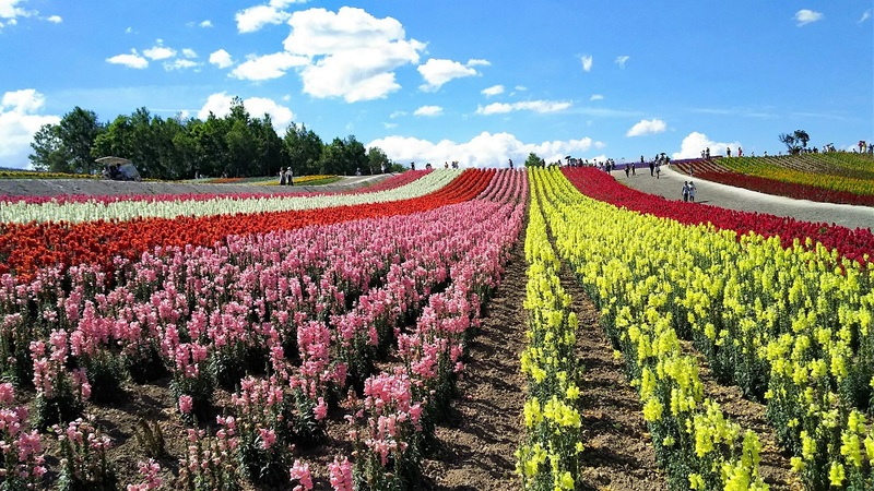 Beautiful flower field in Shikinooka
