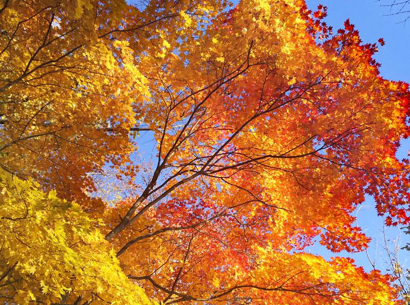 Hokkaido University Autumn