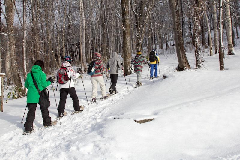 Snowshoeing experience in Niseko