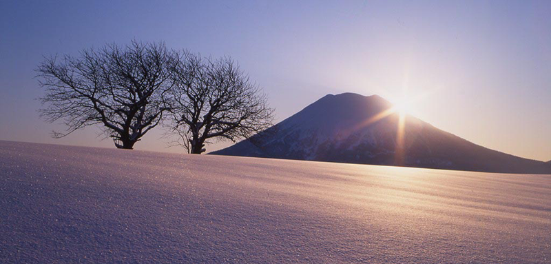 Niseko Winter