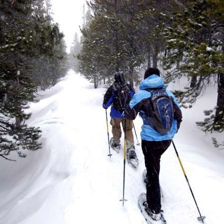 Snowshoeing - Niseko